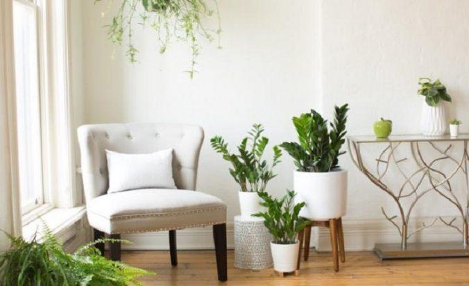 แนะนำ 5 ต้นไม้ยอดนิยมใช้ฟอกอากาศในห้องนอน